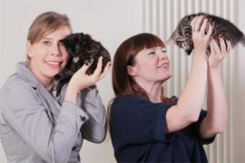 cat in a flat - 1